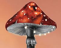 Mushroom Picking Season / NFT series