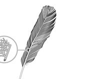 Sachbuchuch-Illustration Federstruktur Vogelflügel