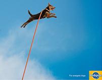 Pedigree Dog Food AD (Print AD campaign)
