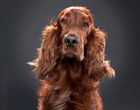 SPCA - Kloof & Highway