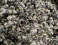 White Spring textures...
