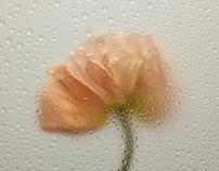 Moody Flowers   Toby Pederson
