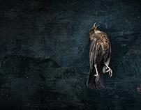 MORTUUS MERULA // DEAD BLACKBIRD