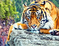 Tiger color adjustments