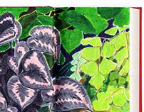 Sketch | botanise