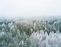 White Winter Scenes