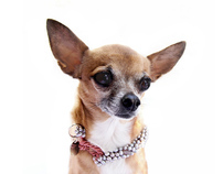 XS dog collar