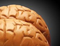 Ass brain