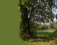 The adventure of Life: The Oak Tree