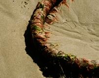 guts sea