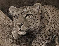 Leopard - Drawing