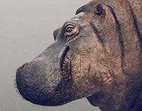 Hippopotamus WIP