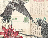 Bic biro drawing on a collection of antique postcards