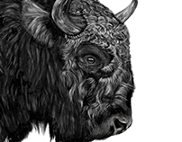 Bison Study Photoshop Painting