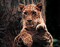 Wildlife - I