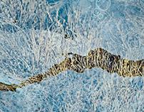 Kelp and Ice