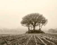 illumica   A foggy day