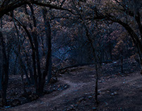 Forest at dawn after the fire