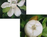 Magnolia lyfe cycle