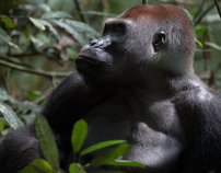 Wildlife tourism in the Central African Republic
