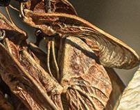 unwanted wings...