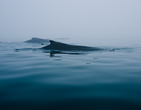 Whales in the Mist