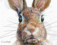 Bunnies | Nursery Art