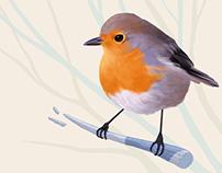 Illustration: English Robin