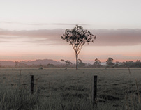 Lismore Morning