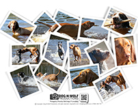 Photo Your Pooch