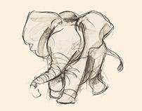 Elephant, pencil sketches