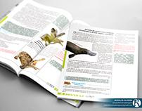 Design Editorial - SAE Digital
