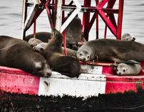 Marine Mammals and Wildlife