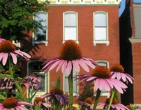 Photography - Summer in Soulard