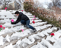 How to Plant Flowers in the Winter