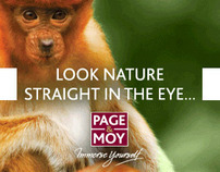 Page & Moy flash banners for wildlife tours
