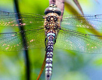 Photography Image of Dragonfly
