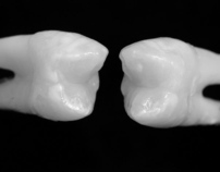 Reproduction of A Natural Dentition