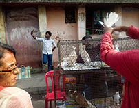 Galiff Street Pet Market, Kolkata, India