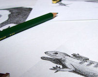Drawings – Creation Science Series Book
