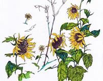 Sunflower_ Ryu hee ryong