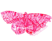 Moth Project Illustrations