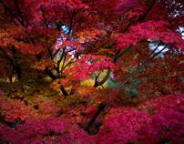 Nature & Scenic