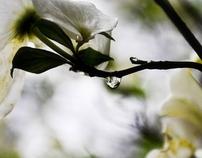 Spring Raindrops