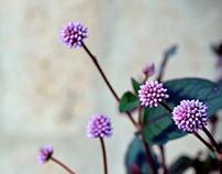 Flowers of Cuatro vientos