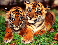 tiger modify [misc]