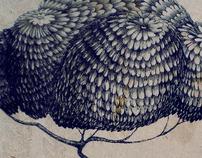 CRAWLS