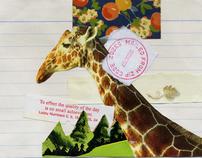 Handmade Collage Postcards