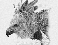 Harpy Eagle drawing
