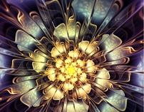 2D Apophysis Flowers